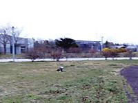 Dsc01813s